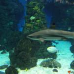 Oceanarium Barcelona